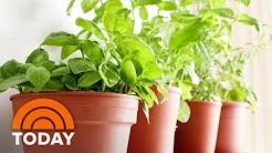 Martha Stewart Shows How To Plant Your Own Herbs | TODAY