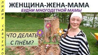 цветы в пне. Мастер класс сад-огород.Женщина-Жена-Мама Канал Лидии Савченко