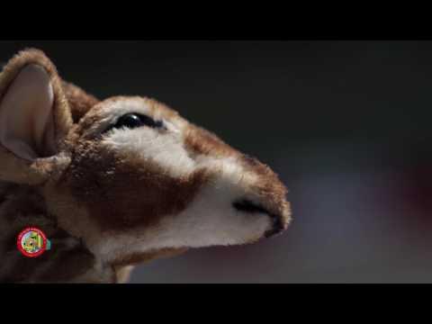 2017 - Videó