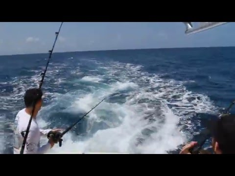 white marlin hookup
