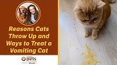 How to Tell if your Cat Is Dying - YouTube