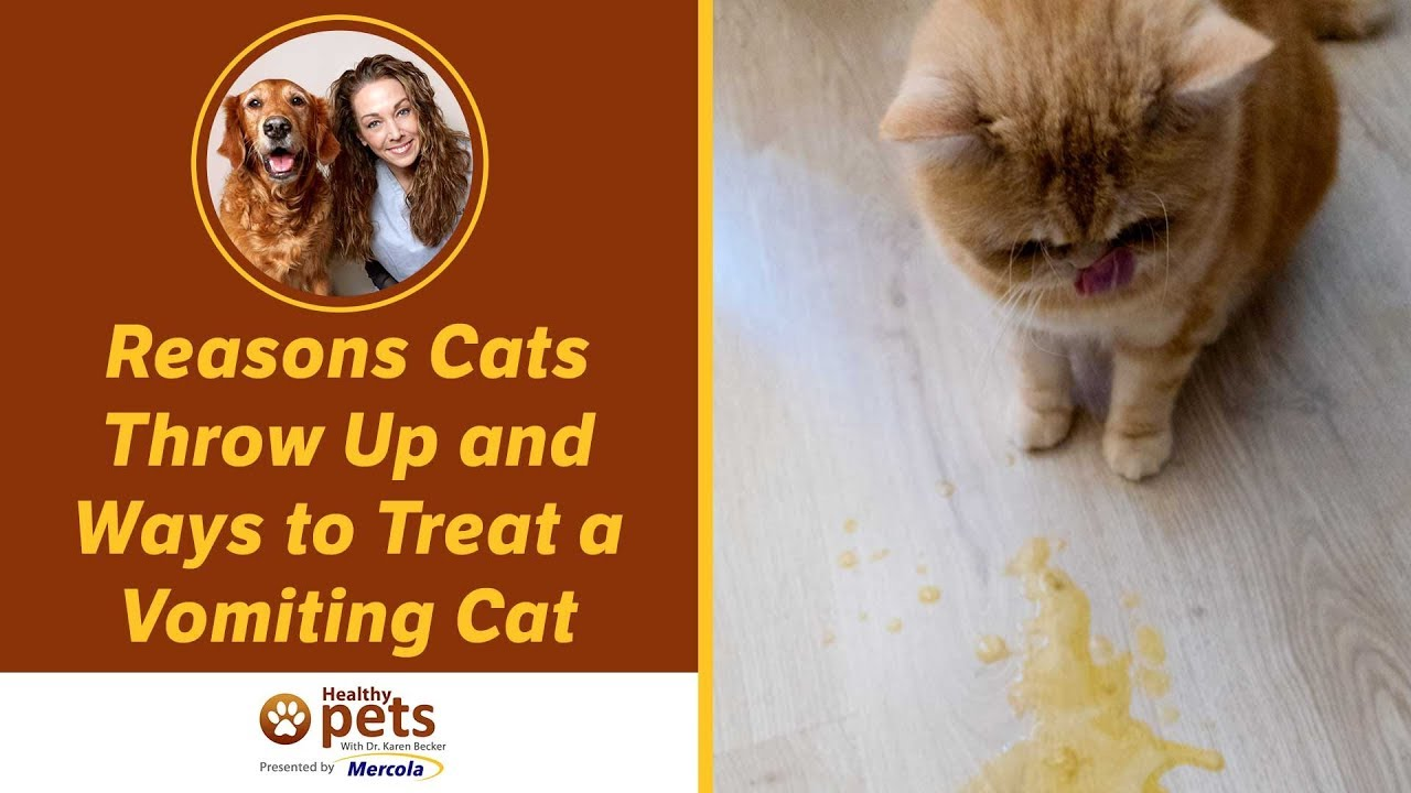 how to stop a cat from puking all the time