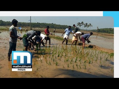 A Novel Initiative From Students To Attract Youth To Farming| Mathrubhumi News