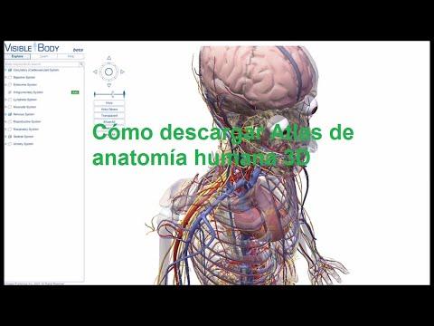 como-descargar-atlas-de-anatomía-humana-3d---chris-la-tortuga