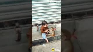 Best Monkey Seen!Comedy Funny Video