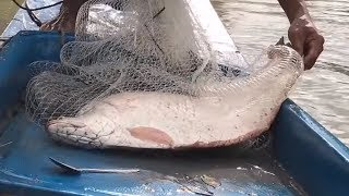 Best Cast Net Fishing INCREDIBLY Huge Fish On Kayak