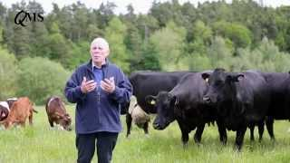 Safety at Calving Video Video