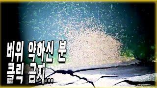 (이상현상)바다에 100w로 불빛을 비췄더니 엄청난 괴생명체들이 모여든다!혹시 지구온난화로 인한 대재앙의 징조?feat.바다 문어 낚시 중 생긴 일