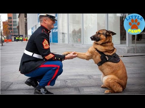 Dogs Welcoming Soldiers Home Compilation 2018
