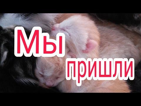 Новорожденные котята