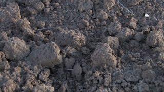 Cadmium Remediation in Soil