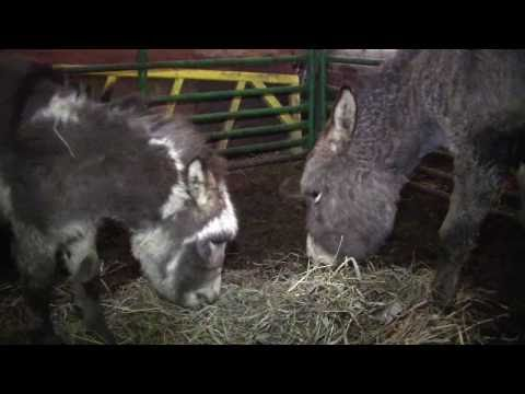 Call 815-600-6464 Chicago Mobile, Traveling Petting Zoo, Chicagoland, Illinois, Animal Rentals