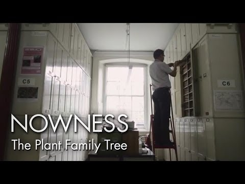 """""""The Plant Family Tree"""" by Kew Gardens and Lonelyleap"""