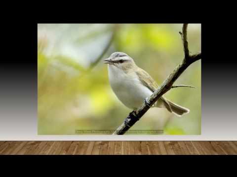 Northern ohio songbirds photo tour