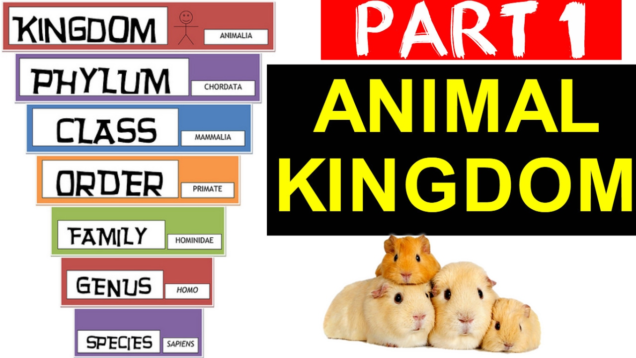 Animal Kingdom Cl Ification Part 1 Ssc Railway State Psc Other Govt Exams