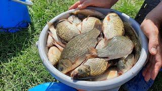 ЗА КАРАСЯМИ НА ОЗЕРО Утренний и обеденный клёв карася Рыбалка на поплавок Ловля карася на удочку