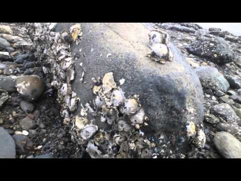 Oyster Hunting - Part 1 - New Zealand