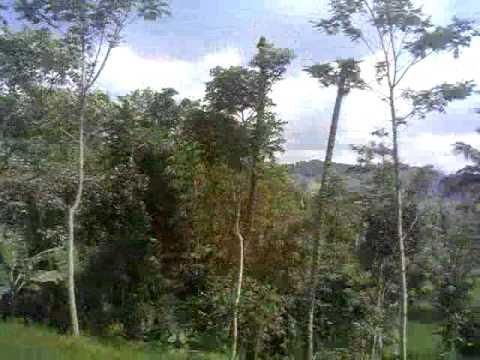 steven n coconut treez - goodbye (bumijawa)