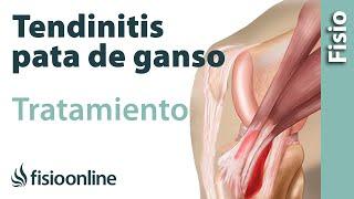 Piernas parte apretados tendones de en la posterior las