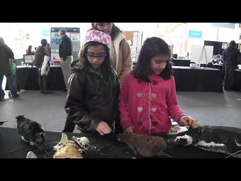 World Penguin Day PSA - Polar Science Weekend