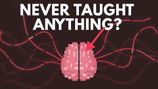 What If You Were Never Taught Anything? thumbnail