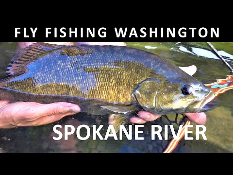 Fly Fishing Washington State Spokane River Evening Dries May Trailer For Prime Video