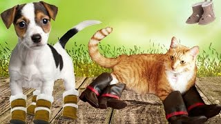 Funny Cats and dogs walking with shoes