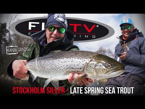 FLY TV - Stockholm Silver - Late Spring Sea Trout Fly Fishing