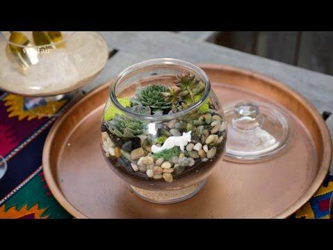 Diy Succulent Terrarium Youtube