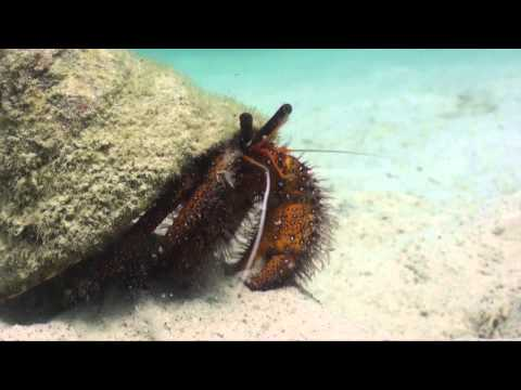 BSAC Underwater Video Course Day 4 Showreel