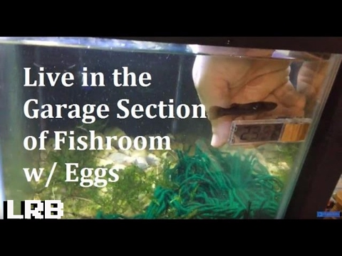 🦐🐠 Live in the Garage Section Collecting Eggs and All Kinds of Stuff