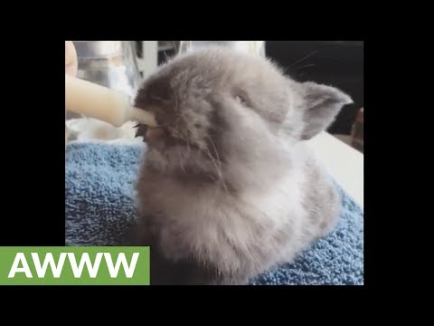 Adorable baby bunny rabbit feeding time