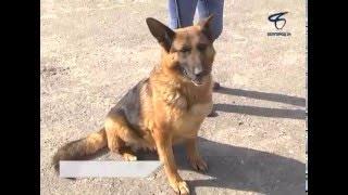 В Белгороде новых хозяев ищут 44 приютские собаки