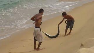 Kıyıdan olta ile zargana avı