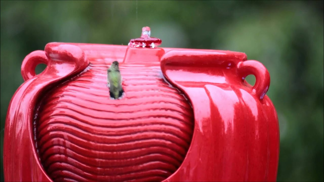 Hummingbird bath fountain club red - YouTube