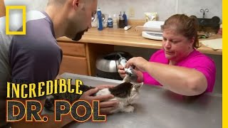 Shoo Fly Kitty | The Incredible Dr. Pol