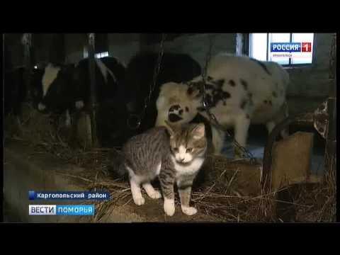 В Каргопольском районе открыли новую ферму