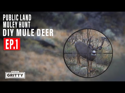 PUBLIC LAND MULEY HUNT DIY MULE DEER