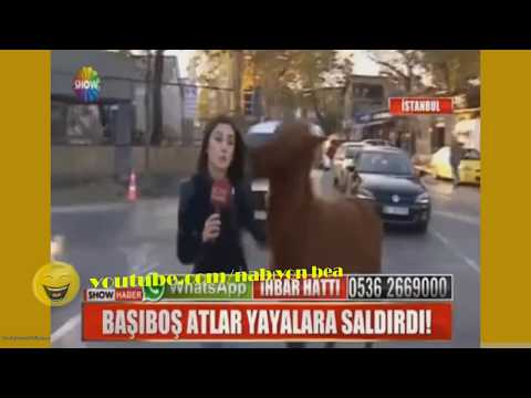 A woman reporter attacked Crazy Horse sarıyer