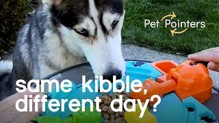 Is My Dog Bored Of Its Food? | Pet Pointers