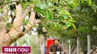 Hà Nội với bốn mùa hoa nở   VTC1