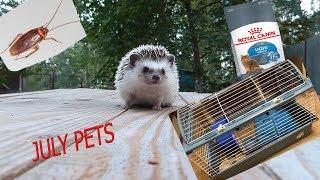Как оставить питомцев одних дома? PETS