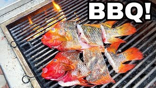 GIANT GOLDFISH BBQ FOR DINNER!