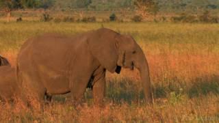 """""""African Savanna"""" by Pim Niesten"""