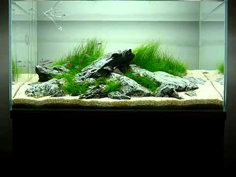 George farmer 39 s 60 litre iwagumi aquarium youtube for Decoration aquarium 60 litres