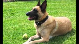 Great Renal Diet For Dogs! Scientific Team Develops Healthy Renal Diet For Dogs Improves Dog Health