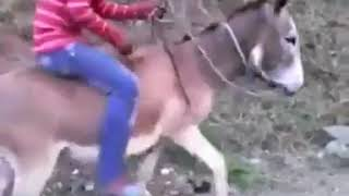 Funny videos 😂Funny pranks try not to laugh challenge😂 Must Watch New Funny - Episode 133