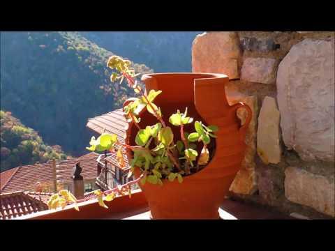 ГРЕЦИЯ  ПРИРОДА  ЦВЕТЫ  GREECE NATURE FLOWERS