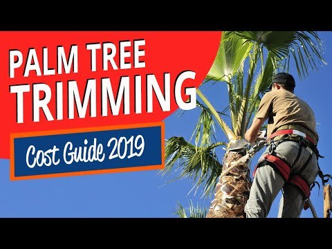 palm-tree-trimming-cost-guide-2019