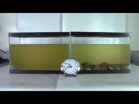 Time Lapse Video Of Clam Filtration